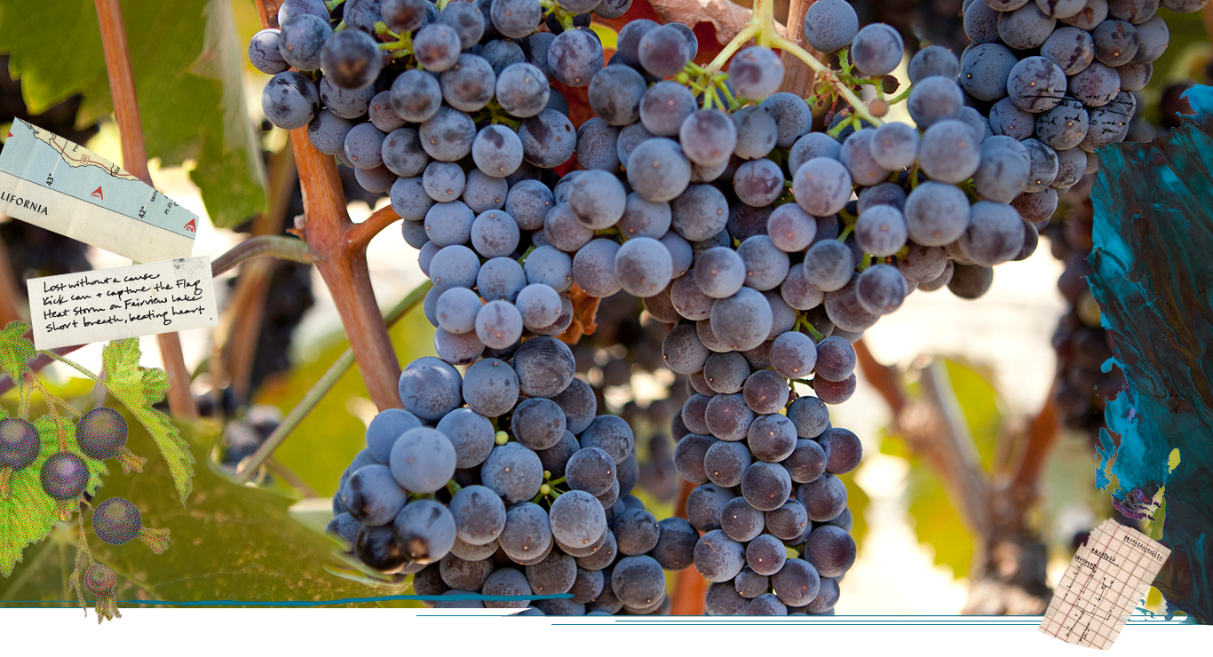 Mourvedre at the ONX Estate Vineyard